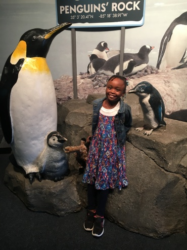 nayla aquarium penguins